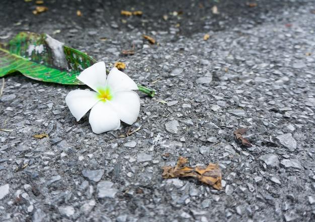 Plumeria na rua