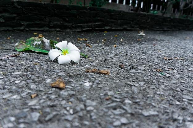 Plumeria no chão