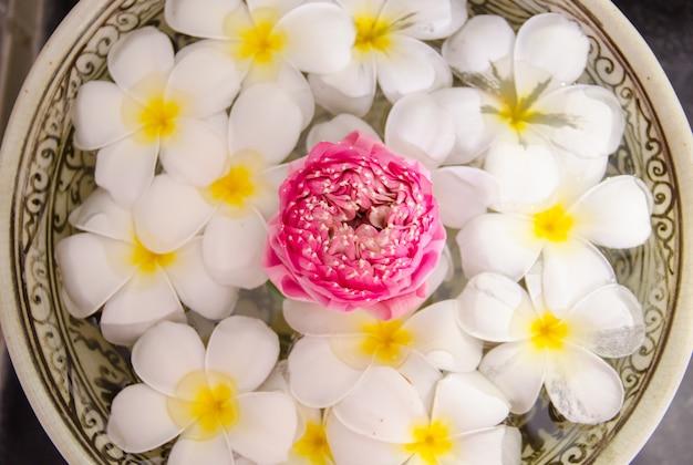Plumeria spa flores sobre a água com lótus rosa na vista superior, foco em lótus