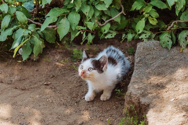 Pobre gatinho de rua, magro, sentado nos arbustos