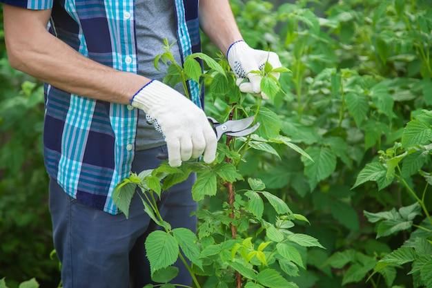 Poda de jardineiro tesoura arbustos. jardim. foco seletivo.