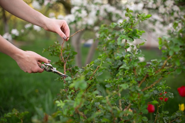 Poda, e, cuting, planta, em, jardim, em, primavera