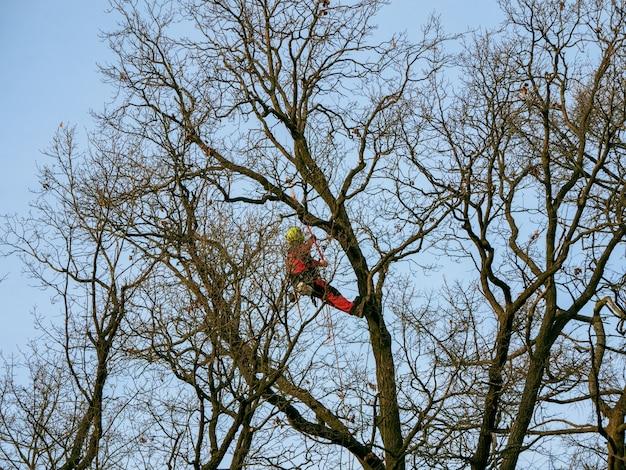 Poda sazonal de árvores no parque da cidade.