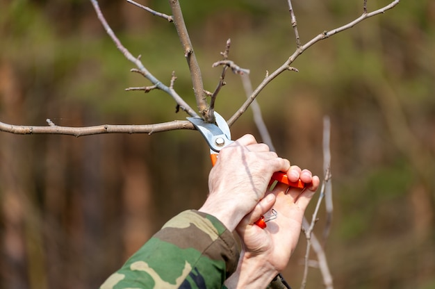 Poda sazonal de árvores. o fazendeiro cuida do pomar.