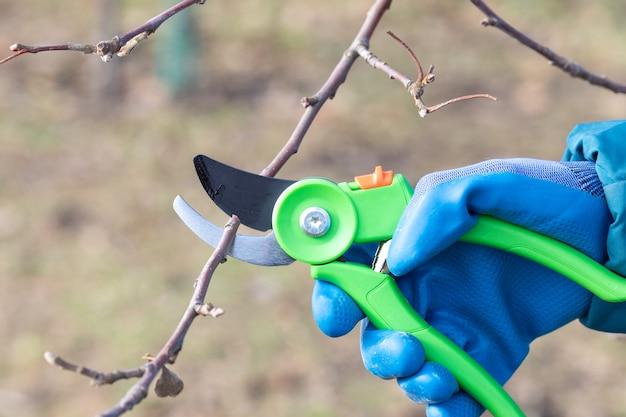Podando árvores com podadores no jardim, tendo como pano de fundo a natureza