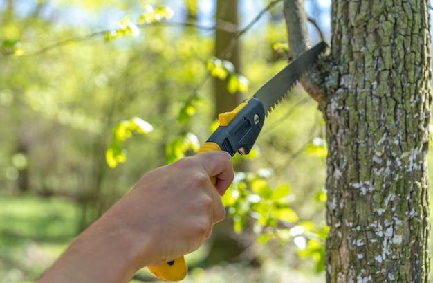 Podar uma árvore com uma serra manual na floresta