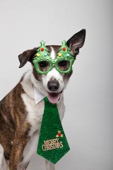 Podenco engraçado com óculos da árvore de natal e gravata verde no branco