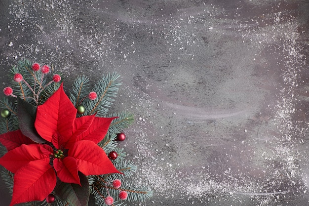 Poinsétia de flor de natal e galhos de árvore do abeto decorado no plano de fundo texturizado escuro, cópia-espaço