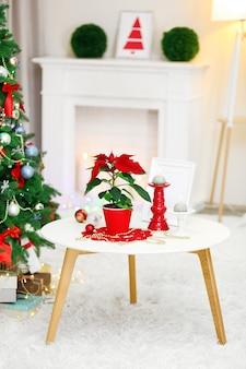 Poinsétia de flor de natal no interior do feriado