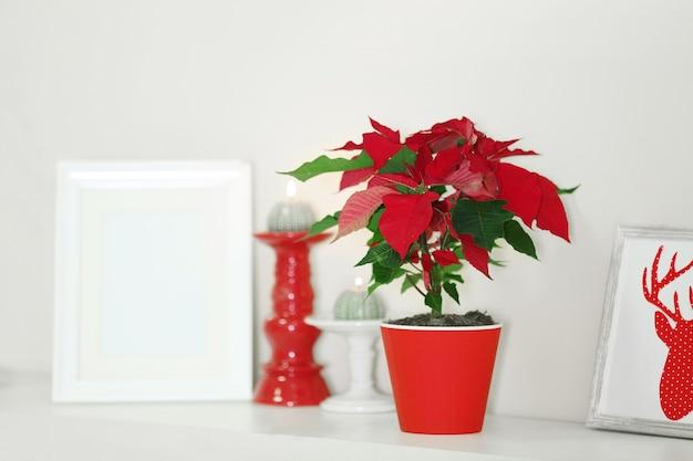 Poinsétia de flores de natal e enfeites na prateleira, sobre fundo claro