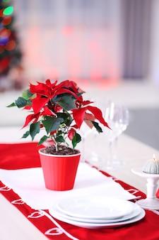Poinsétia de flores de natal na mesa, no fundo de luzes