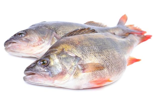 Poleiro de peixe