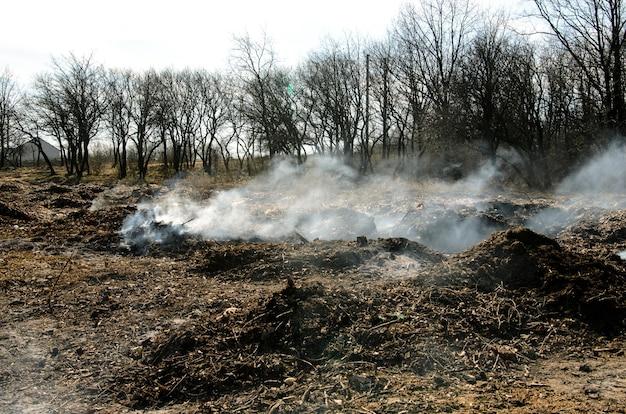 Poluição de lixo do meio ambiente.