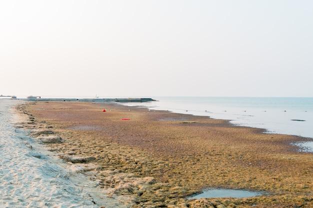 Poluição do mar sujo. ponto focal da lama do mar das algas para o.