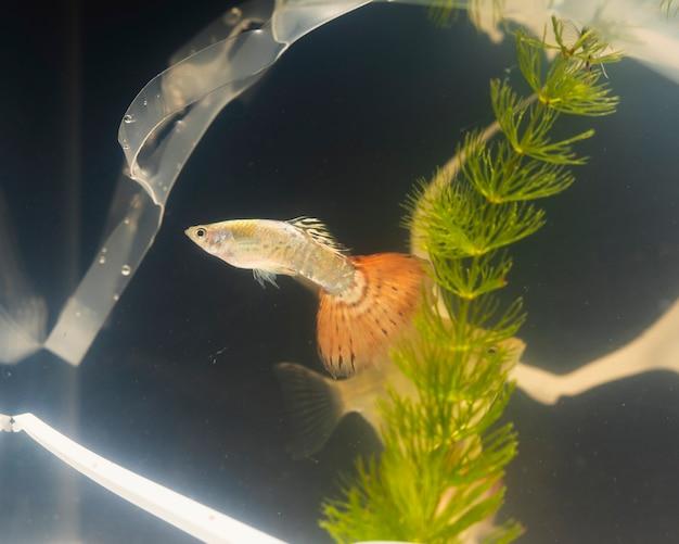 Poluição plástica e plantas em um aquário