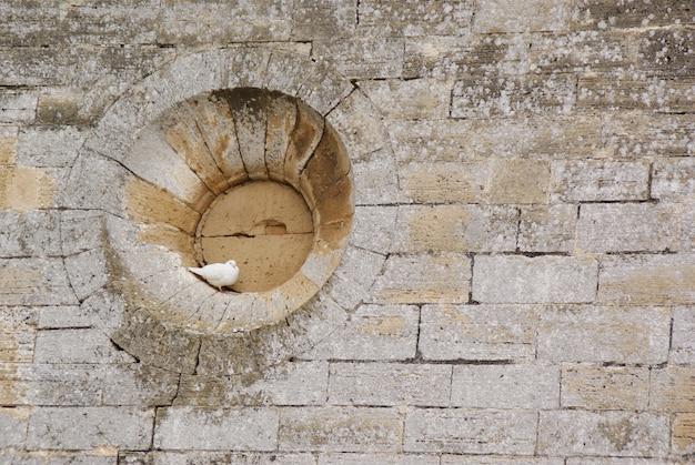 Pomba branca empoleirada no oco de uma janela redonda de um muro de pedra