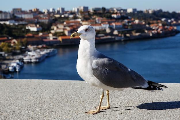 Pomba branca sobre o fundo da cidade, pombo sobre o céu azul