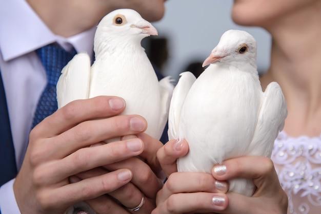 Pombas brancas nas mãos da noiva e do noivo