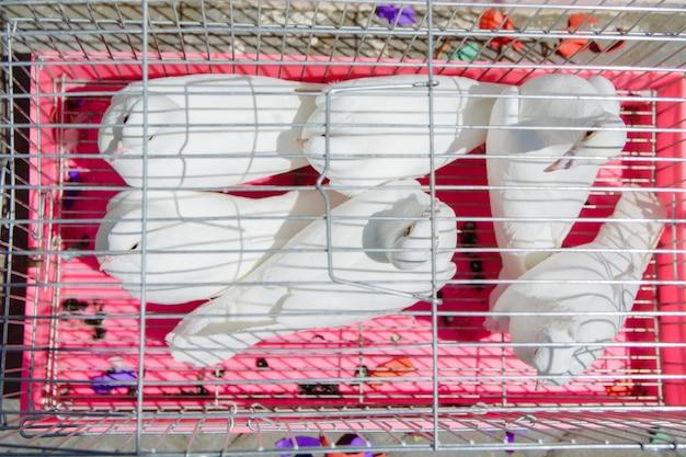 Pombas brancas sentam-se em uma gaiola de ferro