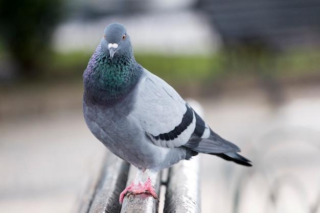Pombo curioso no banco