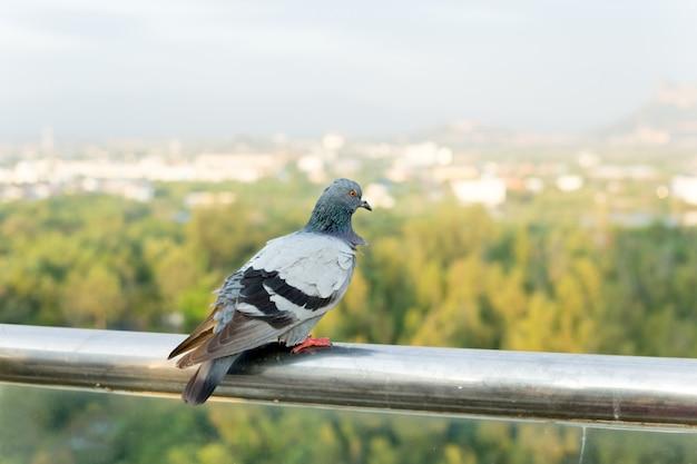 Pombo empoleirado em um poste de aço inoxidável.