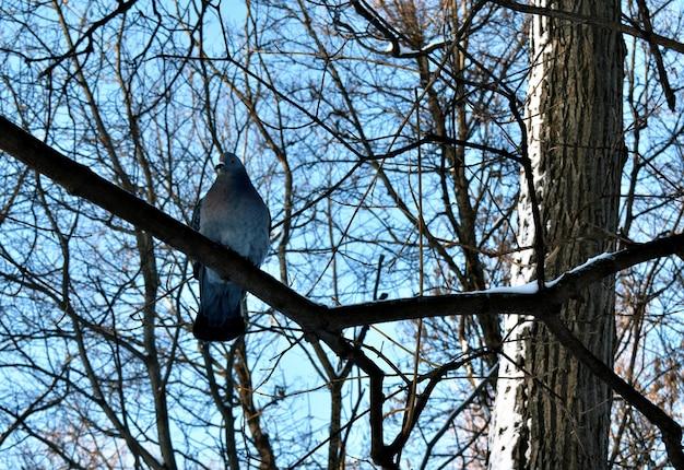 Pombo sentado em um galho de árvore