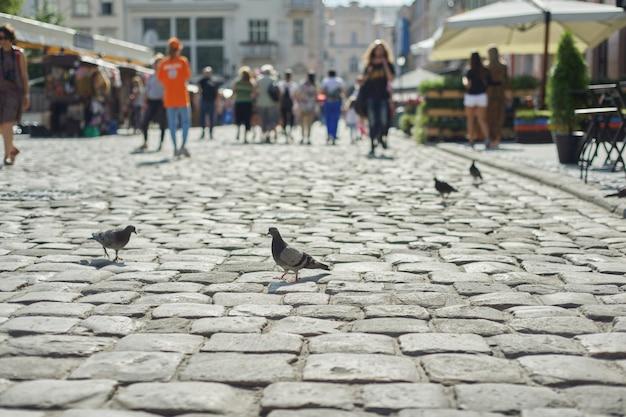 Pombos cinzentos na rua de paralelepípedos na cidade velha, pessoas andando de fundo