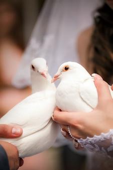 Pombos de casamento nas mãos do noivo e a noiva