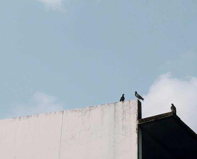 Pombos no telhado