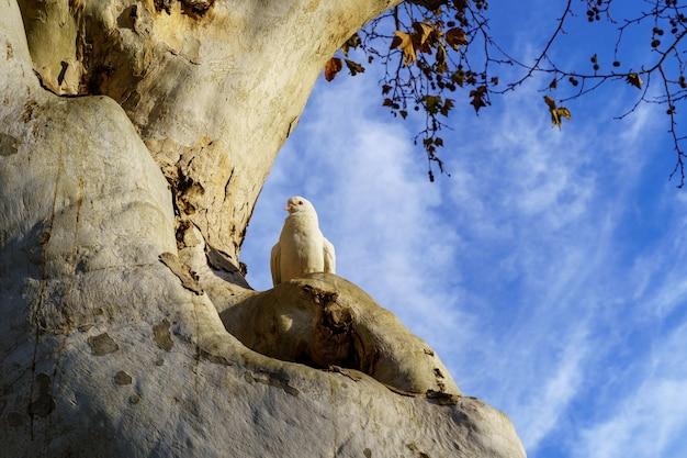 Pombos no topo de uma grande árvore em um parque público em sevilha, céu azul e luz do sol. espanha.