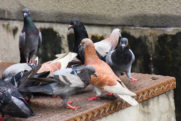Pombos se agarram no chão da cidade com o fundo da cidade