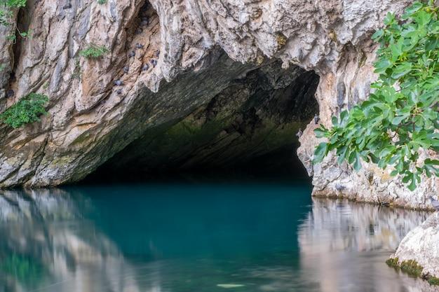 Pombos se reuniram perto da caverna com um rio na montanha, para capturar insetos.