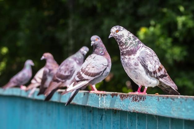 Pombos sentados em uma cerca de ferro em um parque da cidade