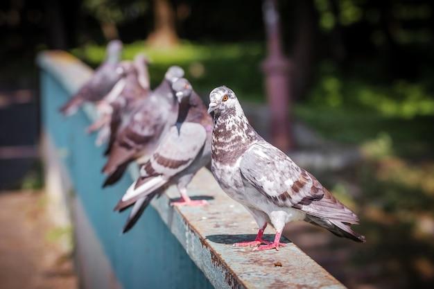 Pombos sentados em uma cerca de metal no tempo ensolarado