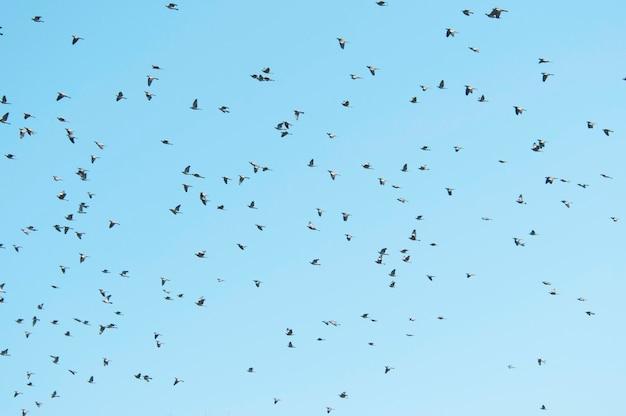 Pombos voando com um fundo de céu azul