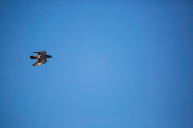 Pombos voando na frente de um céu azul nublado