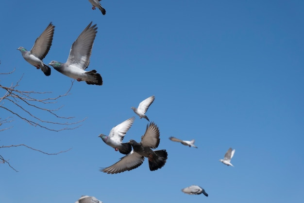Pombos voando no céu azul