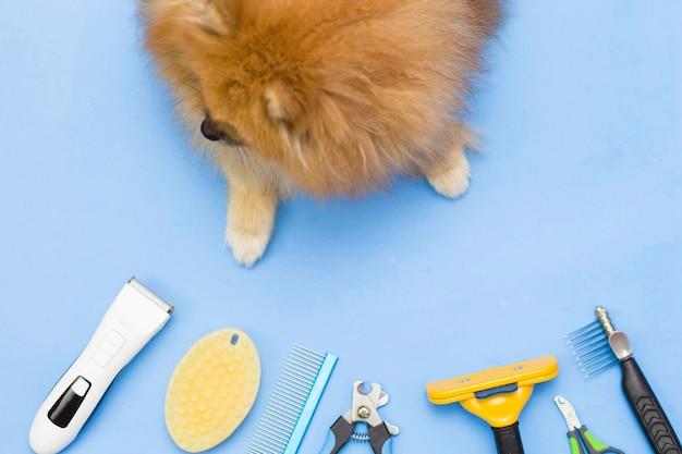 Pomerânia fofa fofa senta-se rodeada por ferramentas de aliciamento. ferramentas de cuidados para animais de estimação. quadro de cima. fundo azul.