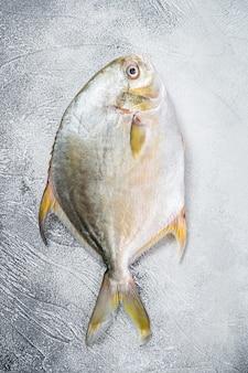 Pompa de peixe cru fresco na mesa da cozinha. fundo branco. vista do topo.