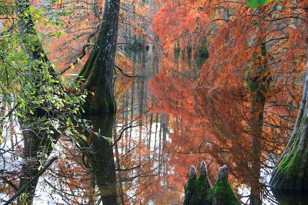 Pong cercado por árvores vermelhas e verdes na floresta