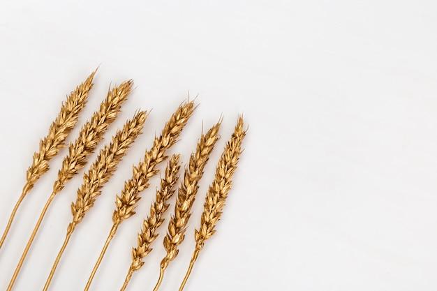 Pontas decorativas de ouro de trigo coloridas na luz. orelhas pintadas douradas, de cor metálica. layout criativo com copyspace. colheita rica.