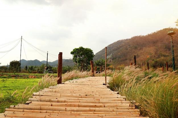 Ponte de bambu na natureza