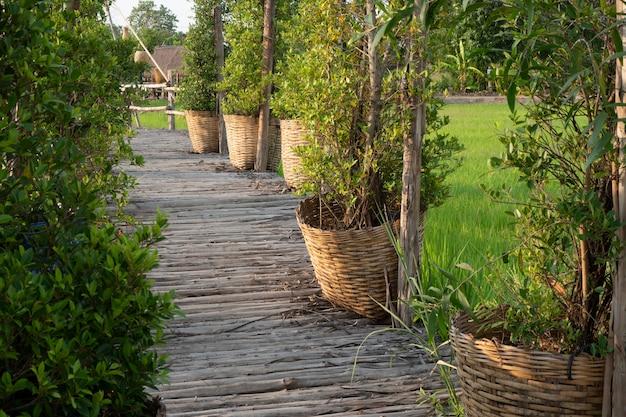 Ponte de bambu que se estende nos campos de arroz