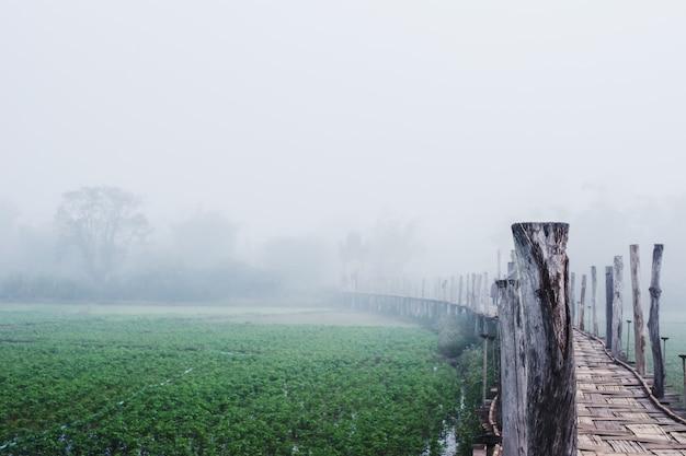 Ponte de bambu sobre o campo vegetal entre a névoa na zona rural da tailândia