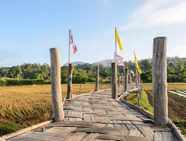 Ponte de bambu velha passa o campo de arroz para o templo