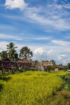 Ponte de madeira ao lado da fazenda verde em nan, norte da tailândia, céu azul, nuvem de céu azul