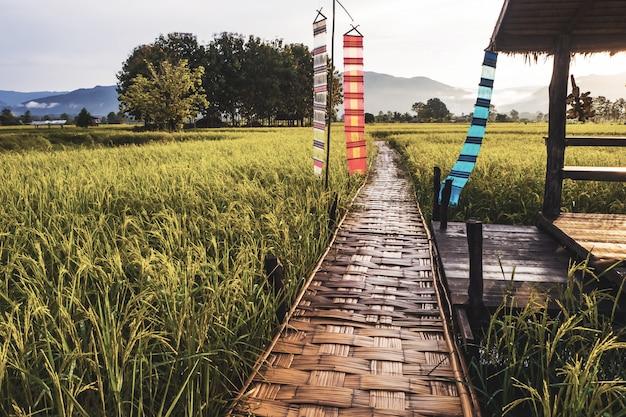 Ponte de madeira ao lado da fazenda verde em nan