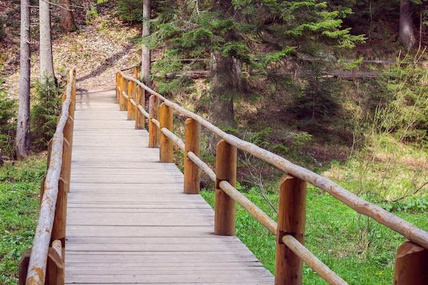Ponte de madeira cercada por uma cerca em uma floresta de pinheiros
