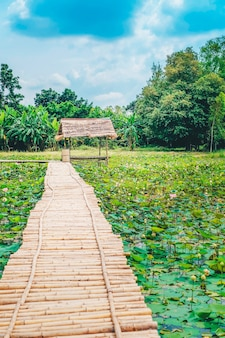 Ponte de madeira e cabana na lagoa de lótus.