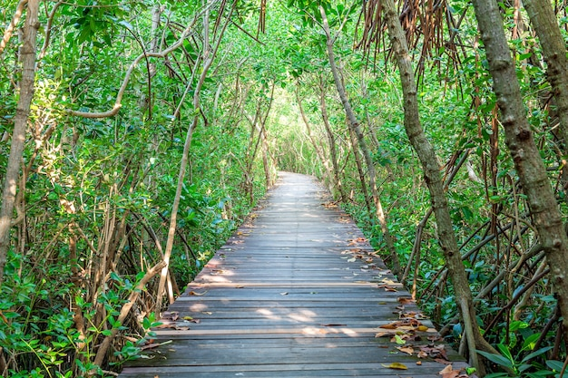 Ponte de madeira e floresta de mangue.